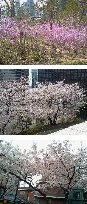 봄꽃20130418.jpg